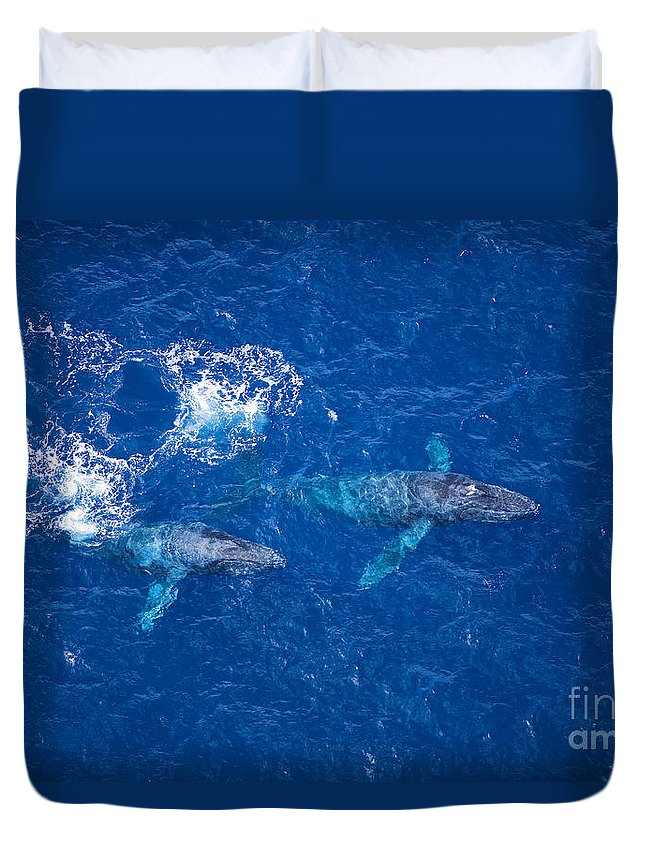 Above Duvet Cover featuring the photograph Humpback Whales Aerial by Ron Dahlquist - Printscapes
