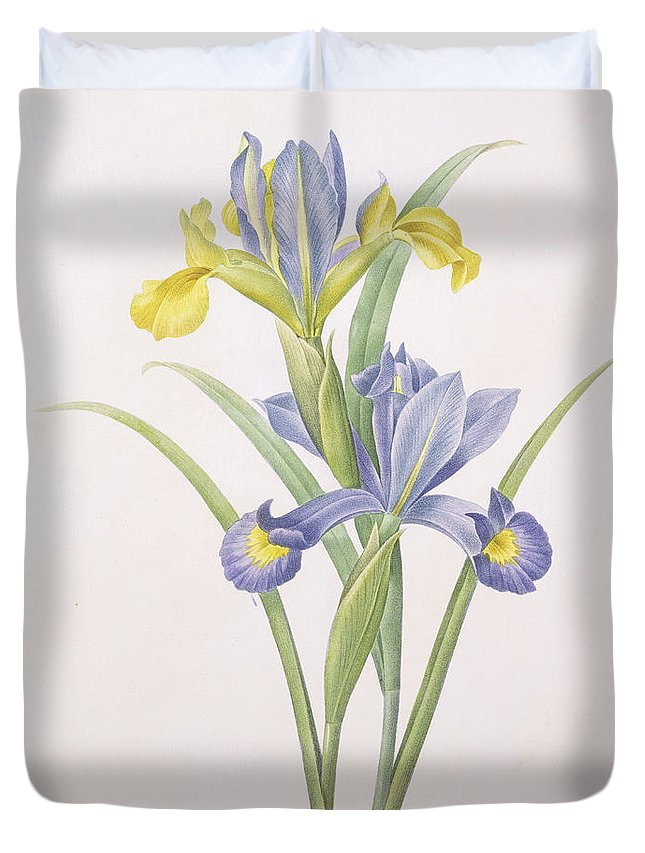 Iris Duvet Cover featuring the drawing Iris Xiphium by Pierre Joseph Redoute