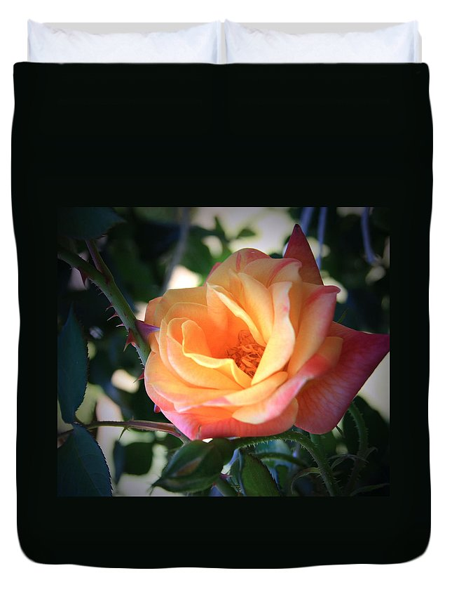 Jacob's Duvet Cover featuring the photograph Jacob's Rose by Marna Edwards Flavell