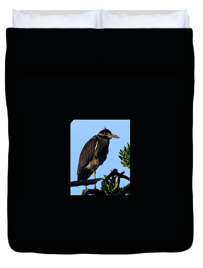 Juvenile Night Heron Duvet Cover featuring the photograph Juvenile Night Heron by Delphine Ross