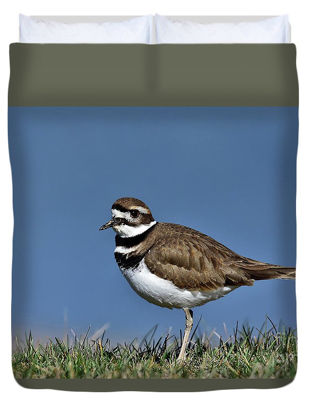 Killdeer Charadrius Vociferous Brown Back White Breast Black Bands Bird Nature Wildlife Photo Photography Water Grass Feathers Broken-wing Act Duvet Cover featuring the photograph Killdeer by Gary Walker