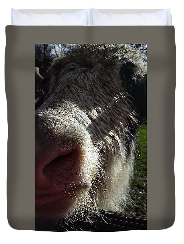 Cattle Duvet Cover featuring the photograph Kisses by Constance Lang