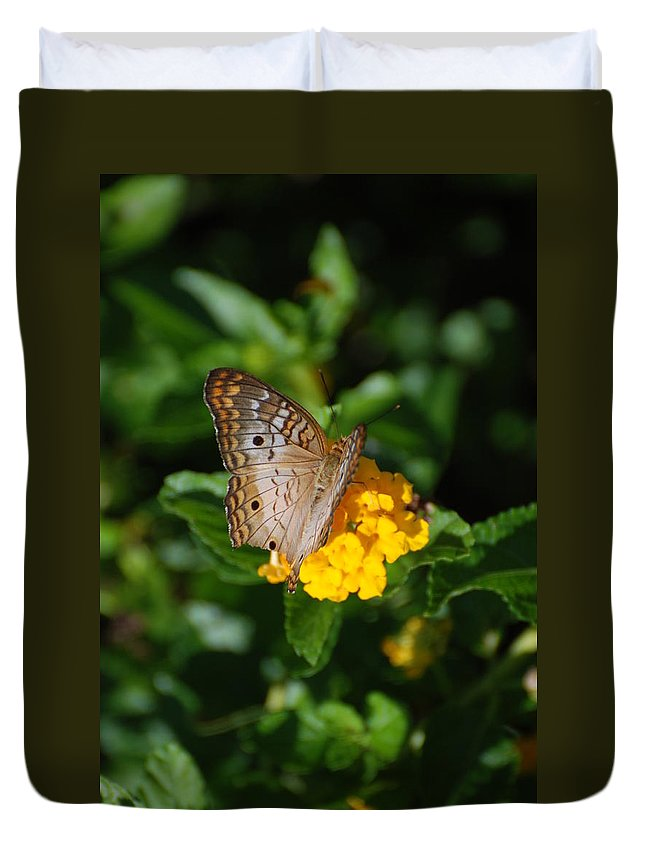 Butterfly Duvet Cover featuring the photograph Landed by Rob Hans