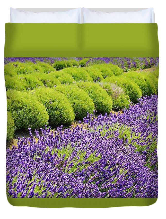 Lavender Duvet Cover featuring the photograph Lavender by Terry Matysak
