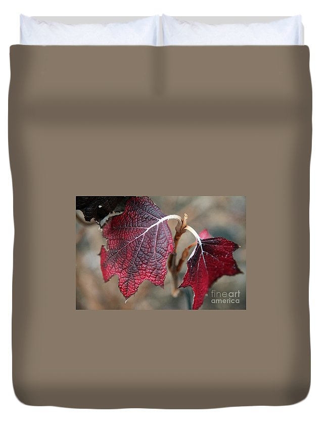 Fall Duvet Cover featuring the photograph Leaves by Amanda Barcon