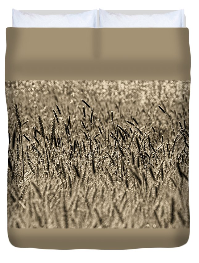 Duvet Cover featuring the photograph Harvest Time by Deb Cohen