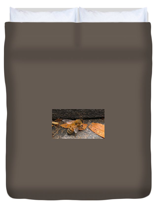 Bee Duvet Cover featuring the photograph Lost In Direction by LKB Art and Photography