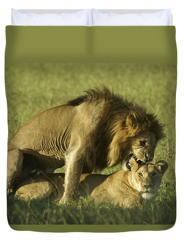 Africa Duvet Cover featuring the photograph Love Bite by Michele Burgess