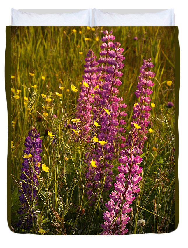Wildflowers Duvet Cover featuring the photograph Lupins And Buttercups by Irwin Barrett