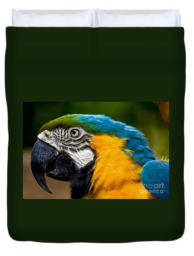 Macaw Duvet Cover featuring the photograph Macaw by Thomas Marchessault