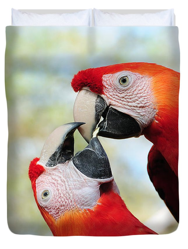 Bird Duvet Cover featuring the photograph Macaws by Steven Sparks