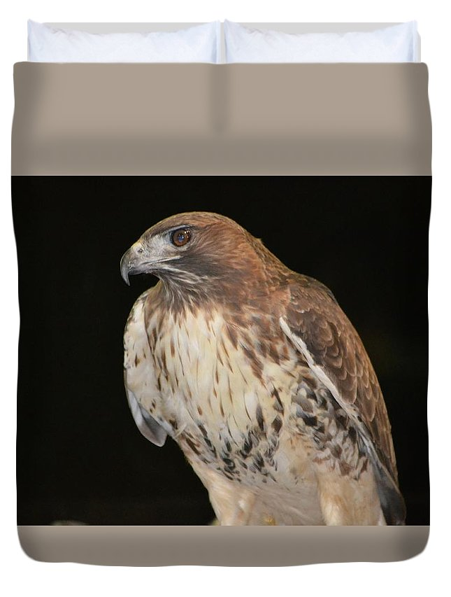 Hawk Duvet Cover featuring the photograph Majestic Hawk by Marjorie Tietjen