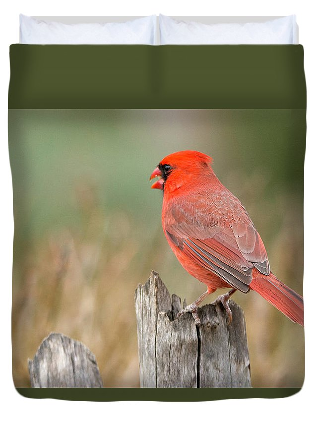 Bird Duvet Cover featuring the photograph Male Cardinal by David Waldrop