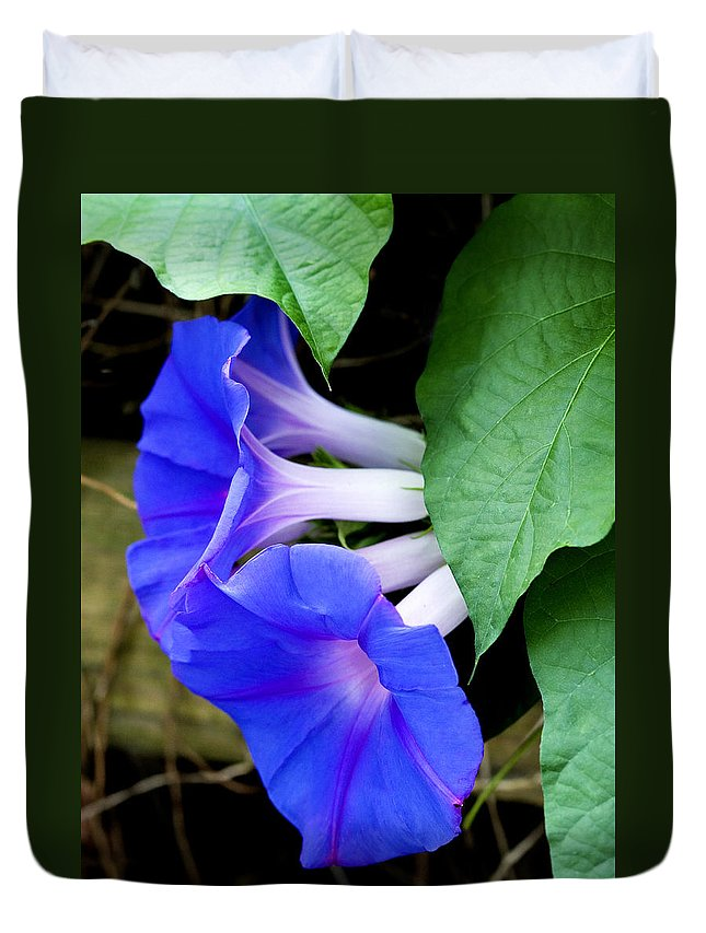 Morning Glory Duvet Cover featuring the photograph Morning Glory by Marilyn Hunt
