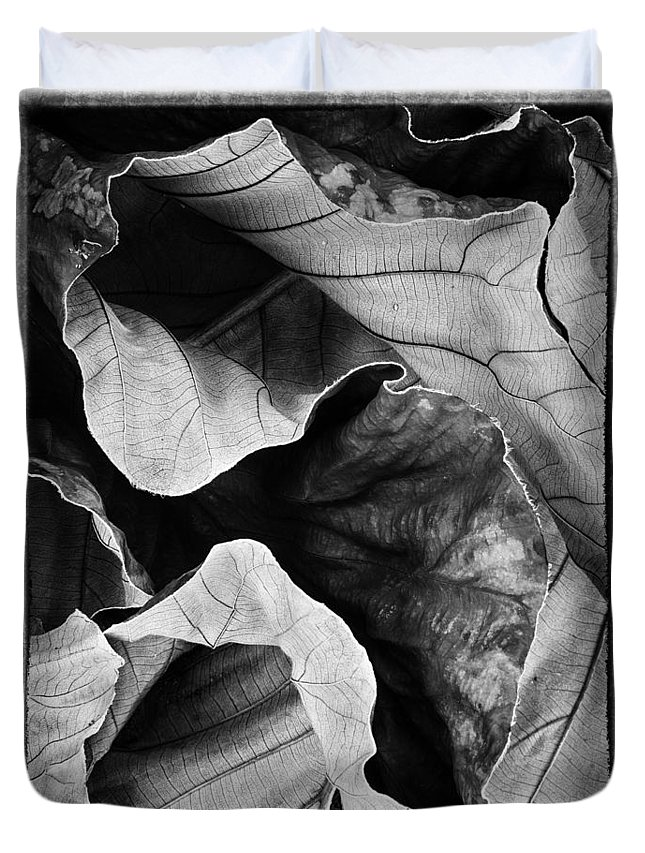Leaves Duvet Cover featuring the photograph Mounts Botanical Garden 2363 by Bob Neiman