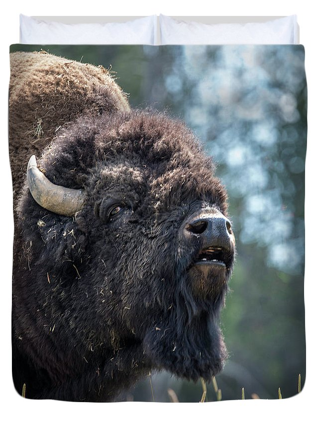Bison Duvet Cover featuring the photograph Mr. Funny Face by Carolyn Fox