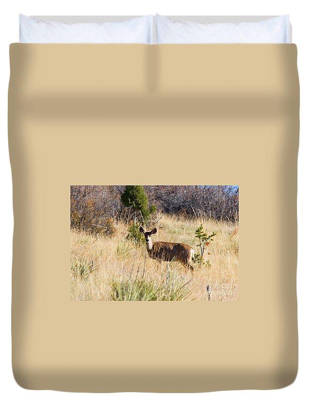 Deer Duvet Cover featuring the photograph Mule Deer In Garden Of The Gods by Steve Krull