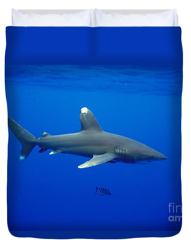 Animal Art Duvet Cover featuring the photograph Oceanic Whitetip Shark by Dave Fleetham - Printscapes
