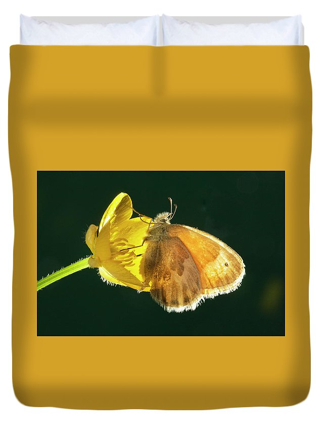 Ochre; Ringlet; Butterfly; Ochre Ringlet; Coenonylmpha Tullia; Butterflies; Inset; Bug; Fly; Flight; Wing; Yellow; Buttercup; Sipping; Nectar; Drinking; Eating; Resting Duvet Cover featuring the photograph Ochre Ringlet Butterfly by Buddy Mays