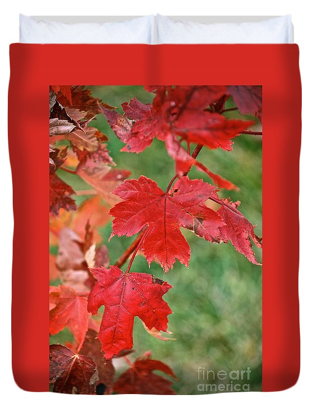 Ohio Autumn Reds Duvet Cover featuring the photograph Ohio Autumn1 by Christine Scott