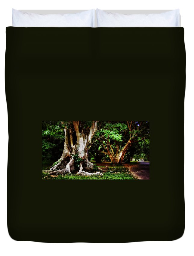 Trees Garden Green Brown Duvet Cover featuring the photograph Old Freinds by Galeria Trompiz