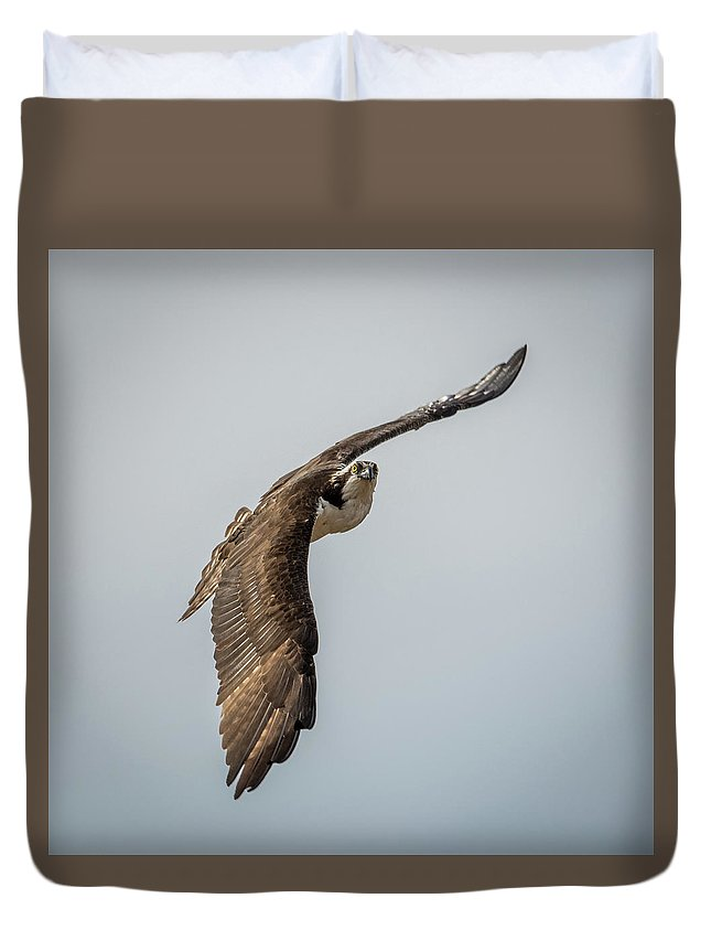 Osprey In Flight Duvet Cover featuring the photograph Osprey In Flight by Paul Freidlund