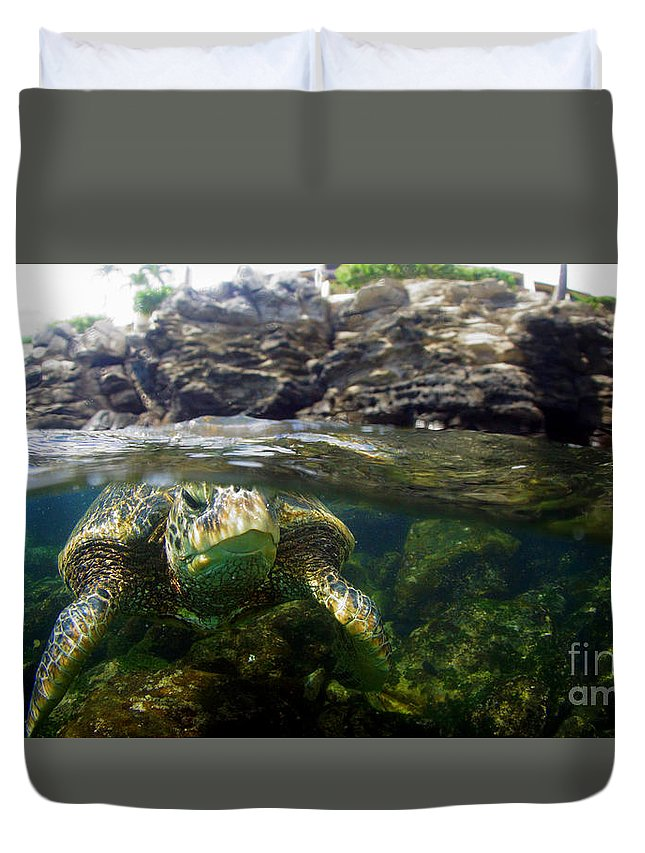 Honu Duvet Cover featuring the photograph Eye Level by Todd Hummel