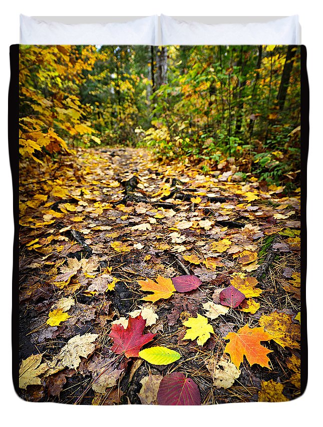 Autumn Duvet Cover featuring the photograph Path In Fall Forest by Elena Elisseeva