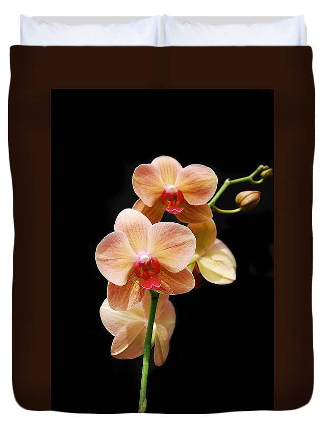 Orchids Duvet Cover featuring the photograph Peach Orchids by Michael Peychich