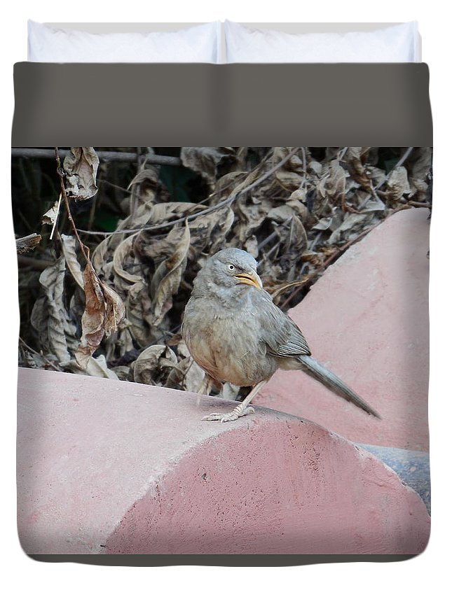 Indian Sparrow Duvet Cover featuring the photograph Photograph by Sannu Prasad