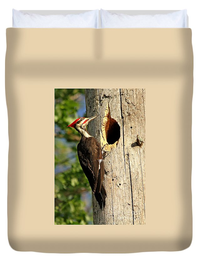 Woodpecker Duvet Cover featuring the photograph Pileated #26 by James F Towne