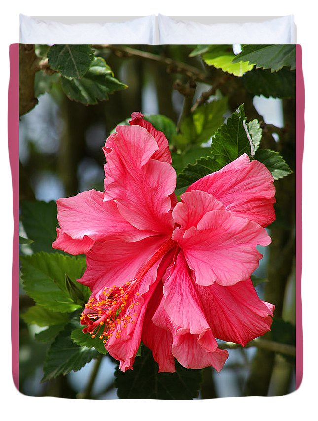 Hibiscus Duvet Cover featuring the photograph Pink Hibiscus Flower On A Tree by Robert Hamm