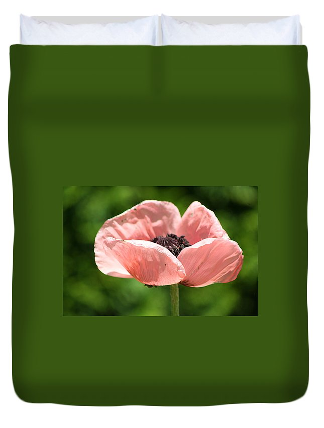 Flower Duvet Cover featuring the pyrography Pink Poppy by Calvin Nelson