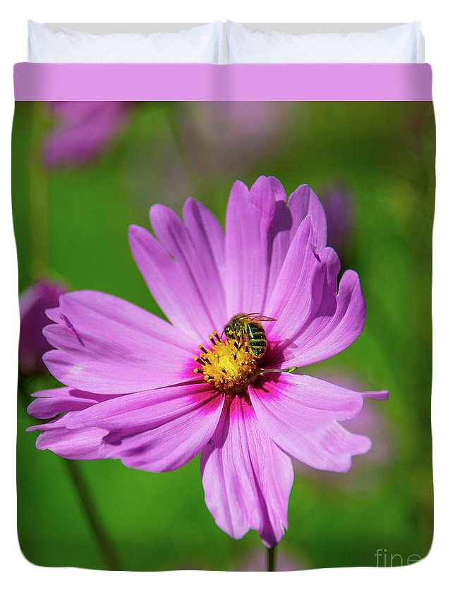 Cosmos Duvet Cover featuring the photograph Pollination by Rob Hawkins