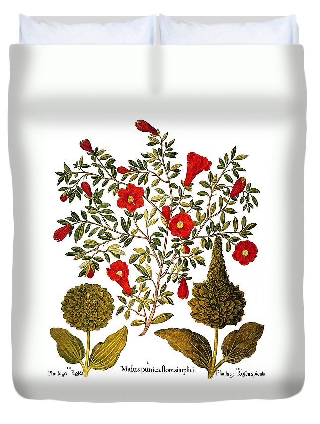 1613 Duvet Cover featuring the photograph Pomegranate, 1613 by Granger