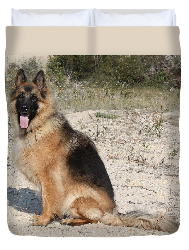 German Shepherd Duvet Cover featuring the photograph Posed by Pat Purdy