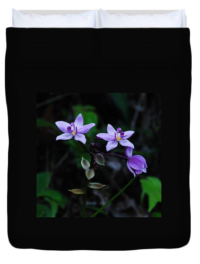 Spathoglottis Plicata Duvet Cover featuring the photograph Purple Orchids 2 by Michael Peychich