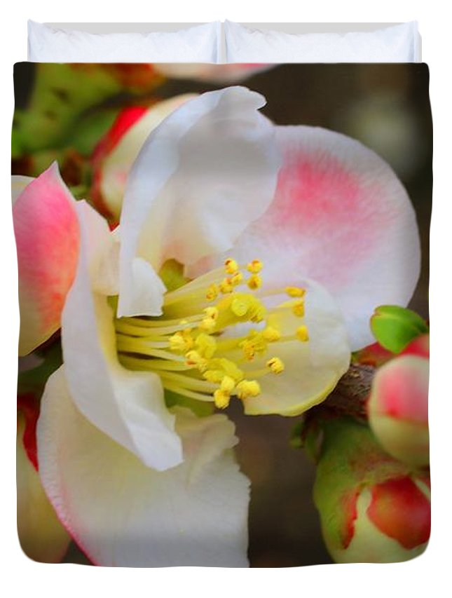 Quince Duvet Cover featuring the photograph Quince Toyo-nishiki by Kathryn Meyer