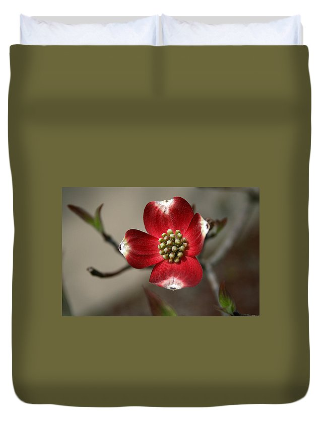 Flower Duvet Cover featuring the photograph Red Dogwood by Andrei Shliakhau