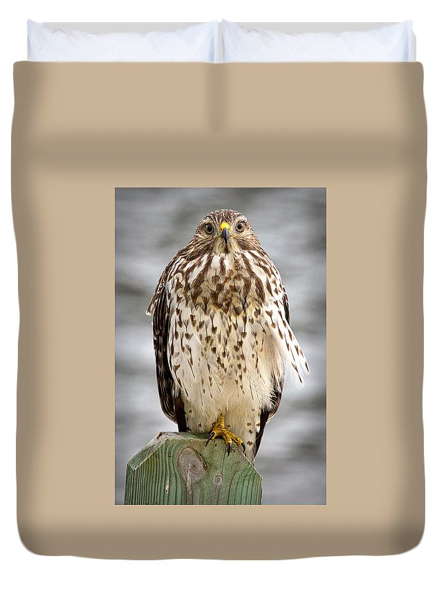 Red Shouldered Hawk Duvet Cover featuring the photograph Red Shouldered Hawk by John McCuen