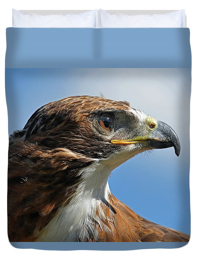 Hawk Duvet Covers