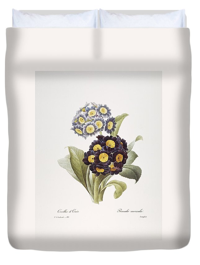 1833 Duvet Cover featuring the photograph Redoute: Auricula, 1833 by Granger