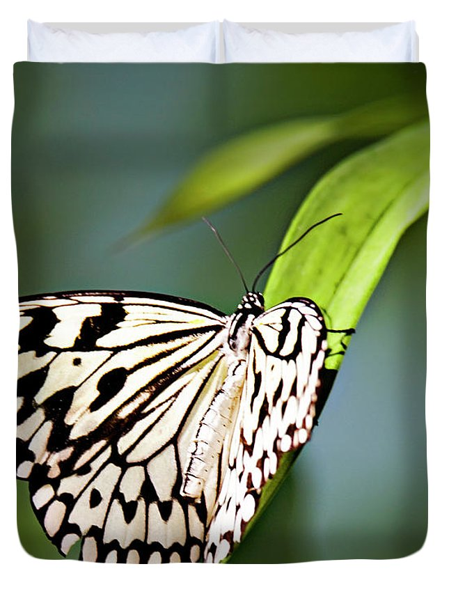 Butterfly Duvet Cover featuring the photograph Rice Paper Butterfly 5 by Walter Herrit