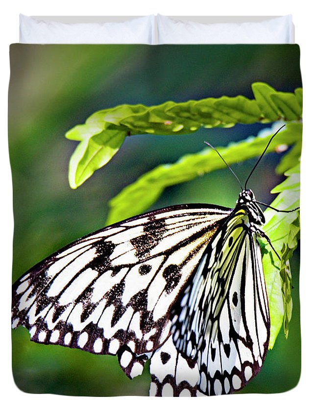 Butterfly Duvet Cover featuring the photograph Rice Paper Butterfly 7 by Walter Herrit