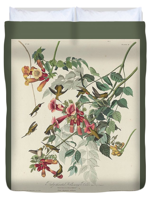 Audubon Duvet Cover featuring the drawing Ruby-throated Hummingbird by Dreyer Wildlife Print Collections