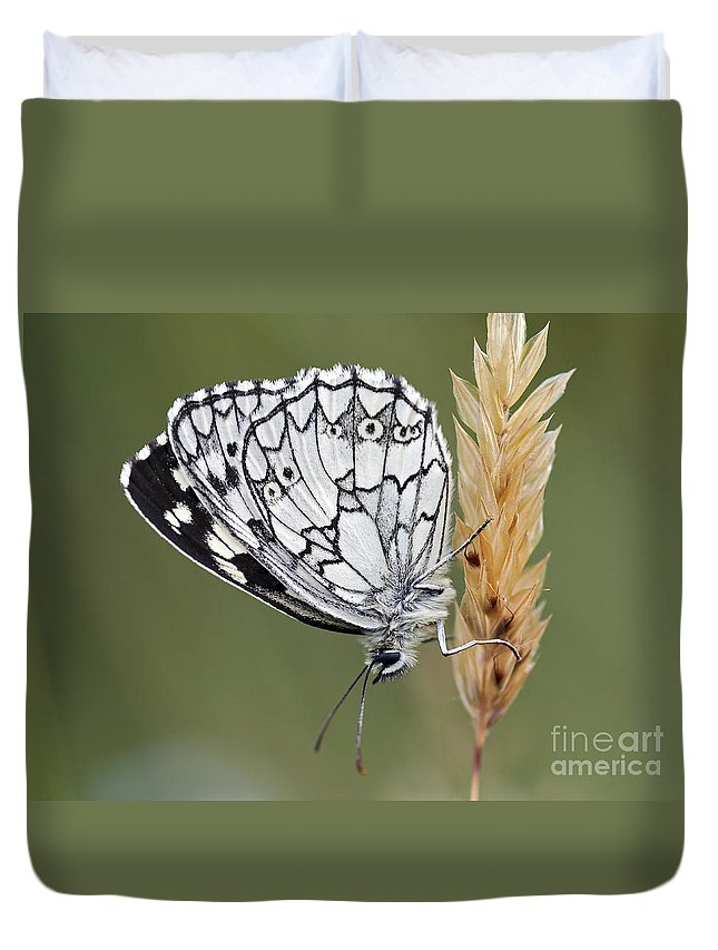Insect Duvet Cover featuring the photograph Satyr On The Grass by Michal Boubin