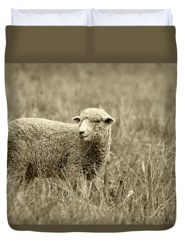 Sheep Duvet Cover featuring the photograph Sheep In A Meadow by Robert Hamm