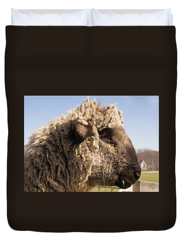 Sheep Duvet Cover featuring the photograph Sheep In Profile by Diane Schuler