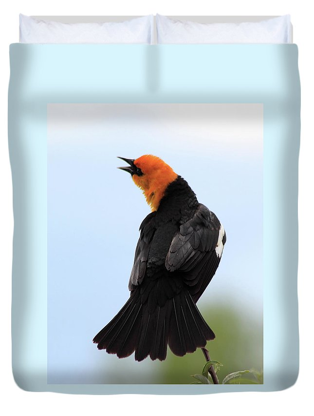Yellow-headed Blackbird Duvet Cover featuring the photograph Showing Off by Shane Bechler