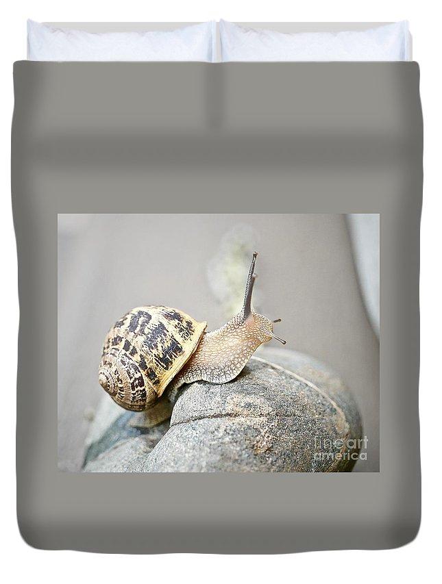 Slug Duvet Cover featuring the photograph Slug by Elisabeth Derichs
